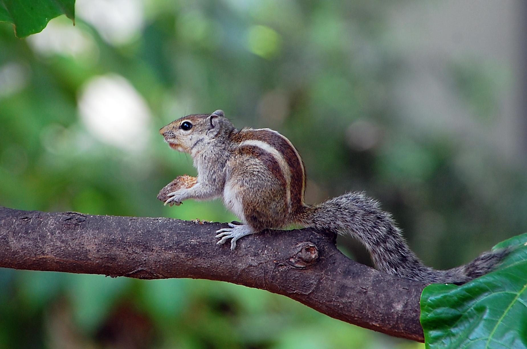 Animal squirrel pictures