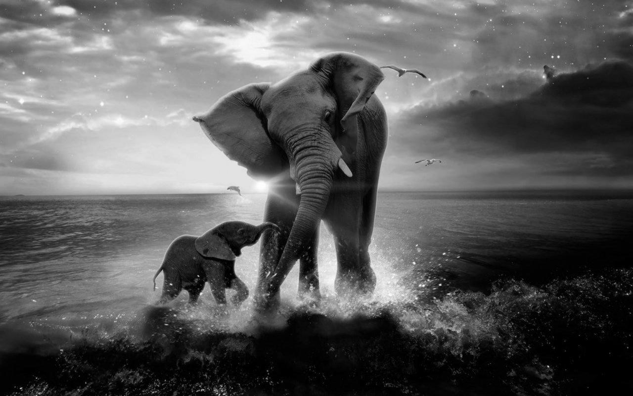 Elephant with baby wallpaper