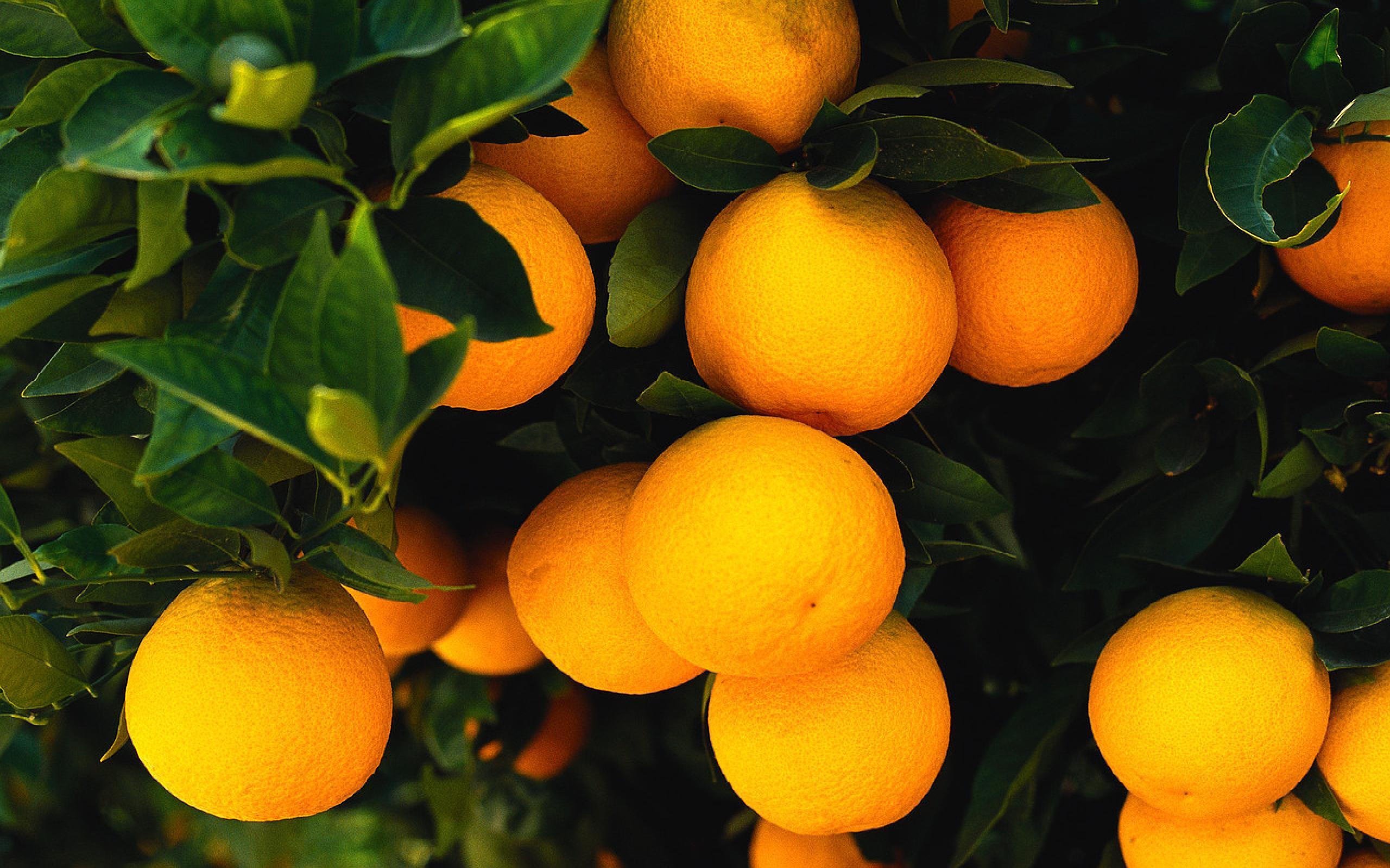 Group orange photo