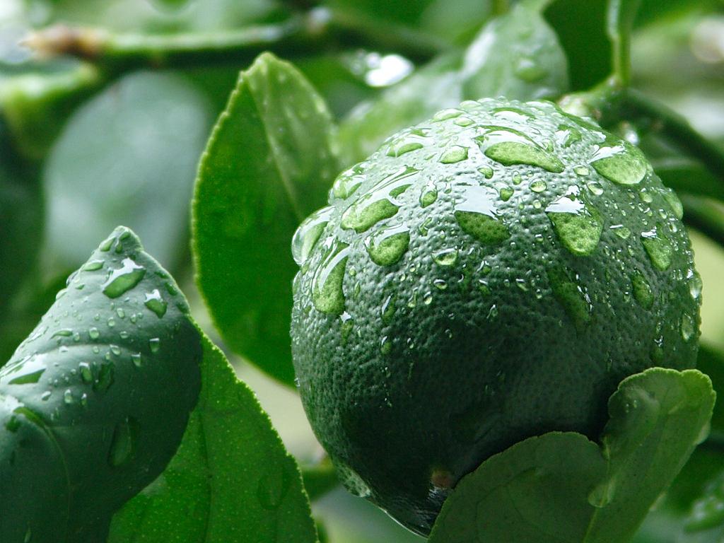 Lemon vegetables