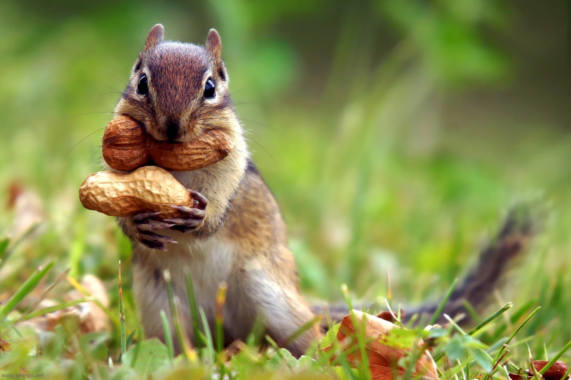 Squirrel pictures