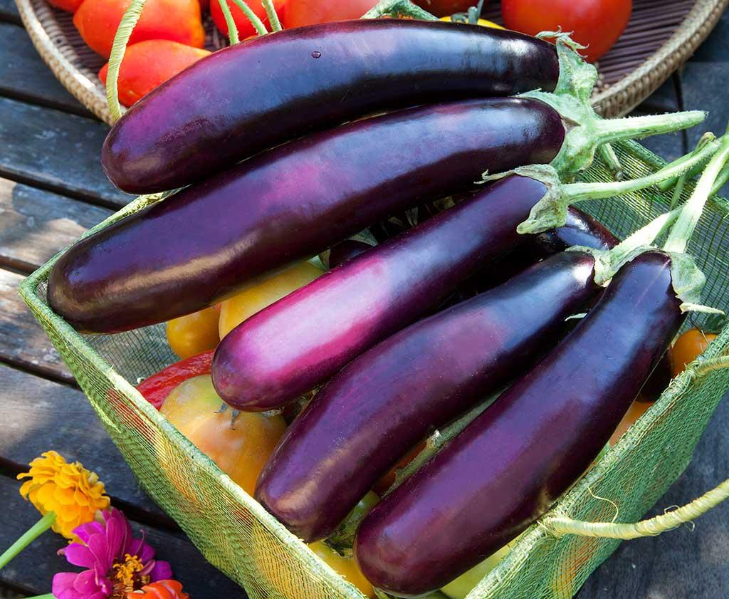 Guinea squash brinjal fruit pictures