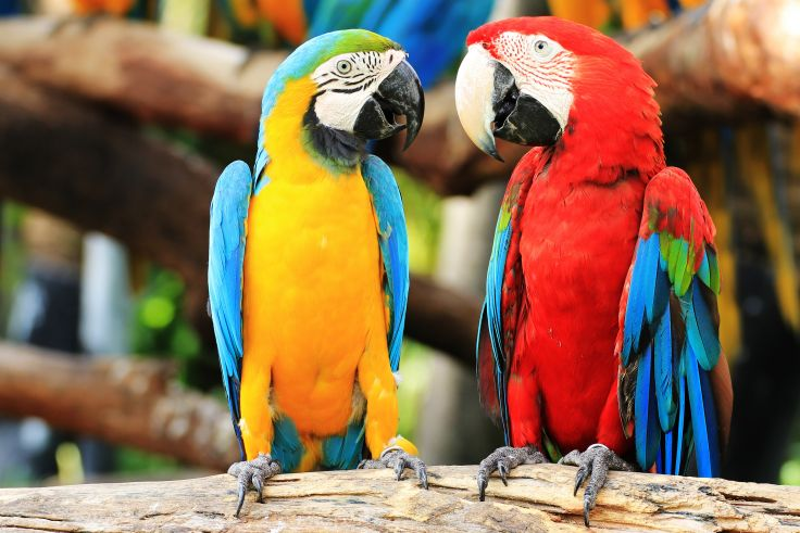 Love parrot bird pictures