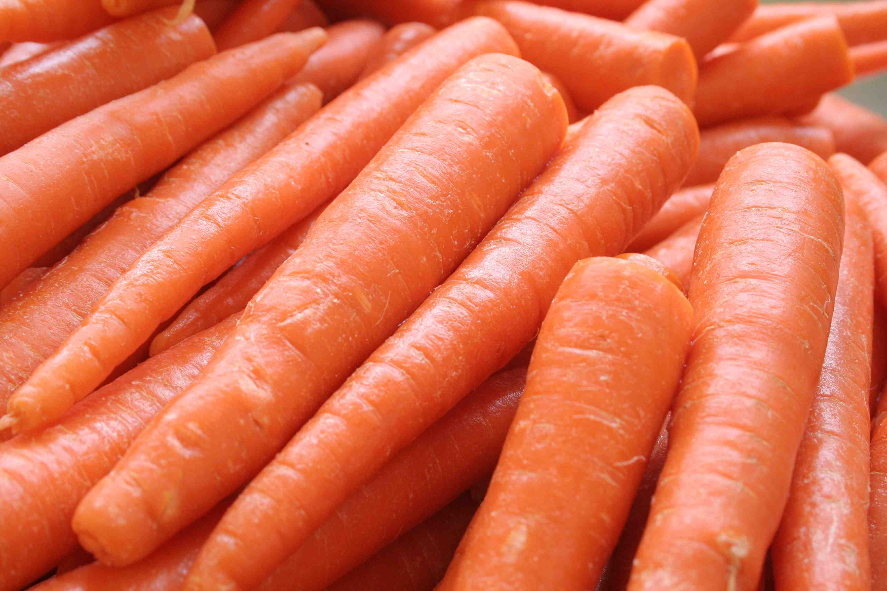 Carrot photos