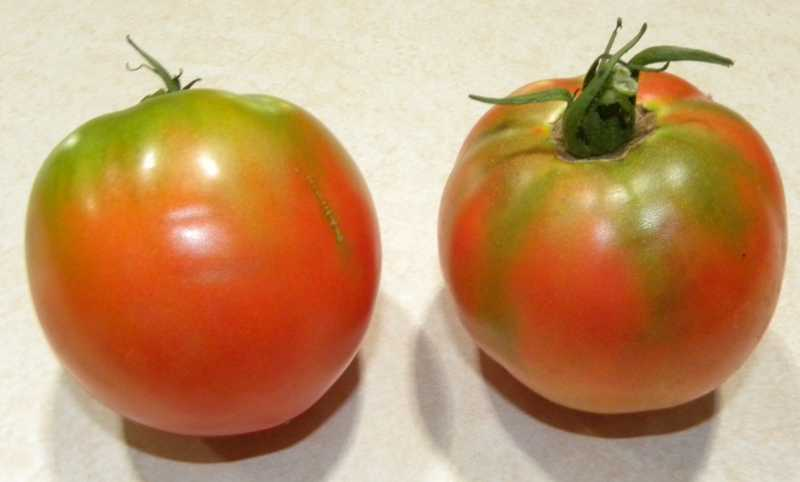 Two tomato photos