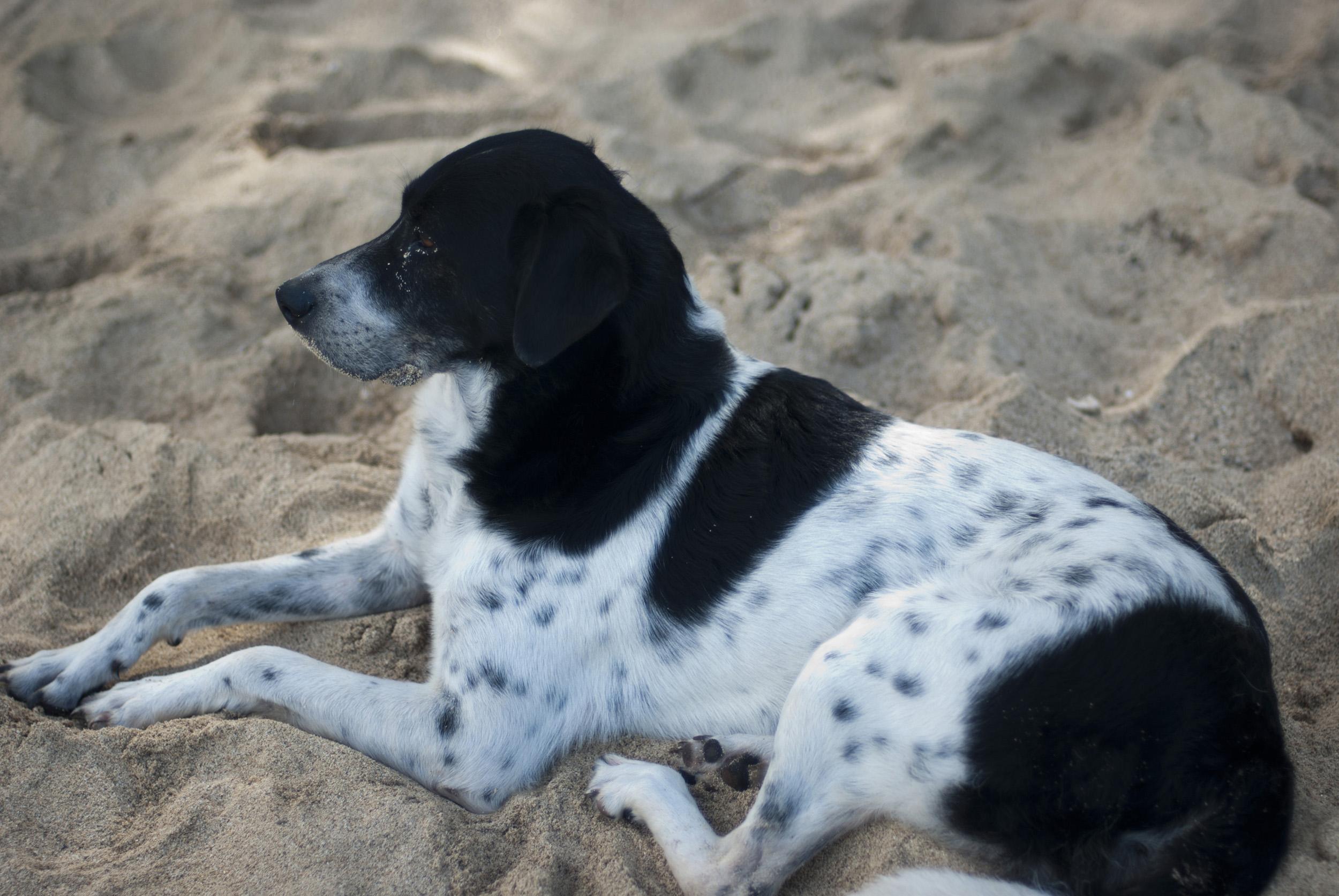 Black and white dog animal photos