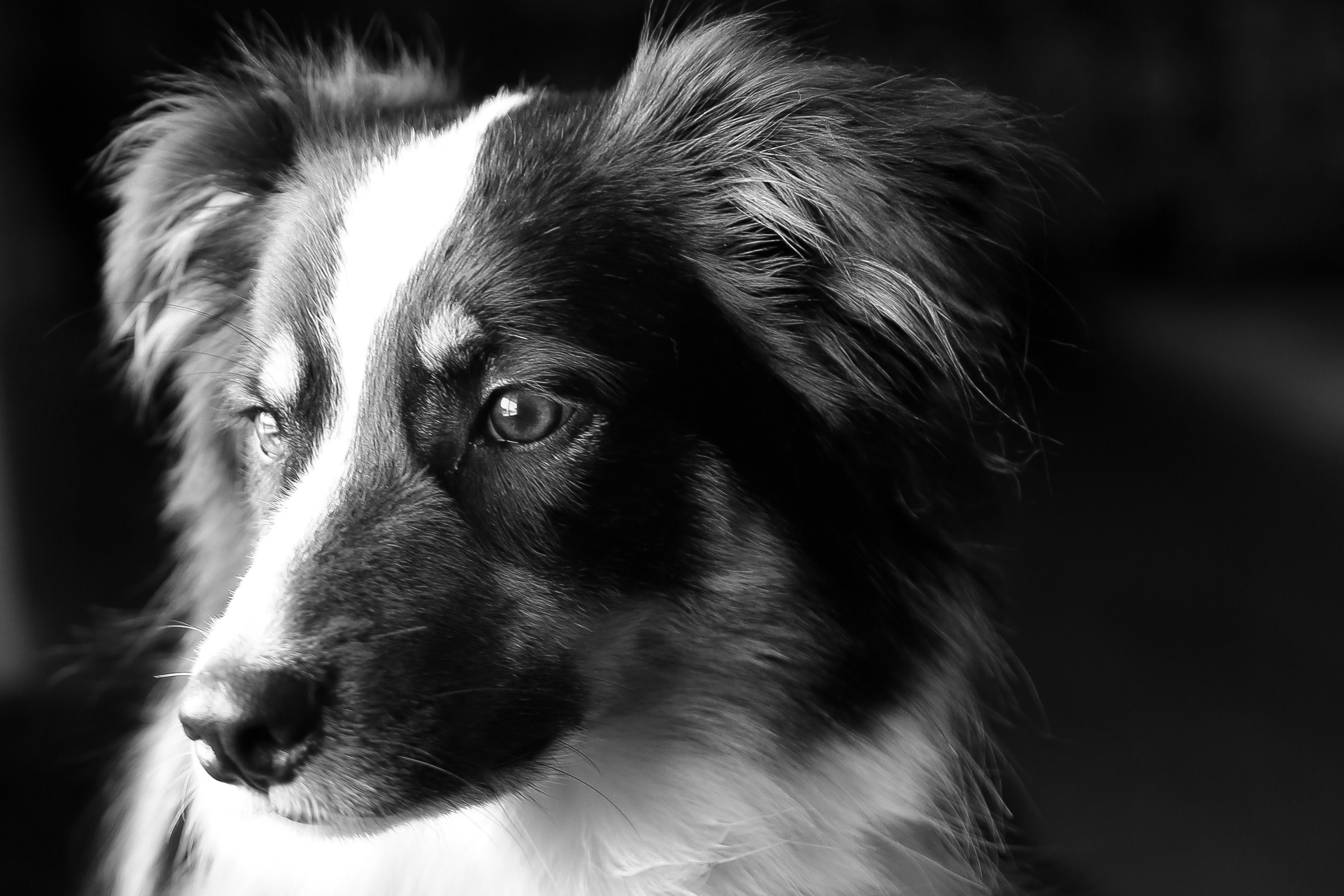 Black and white dog cute face stills