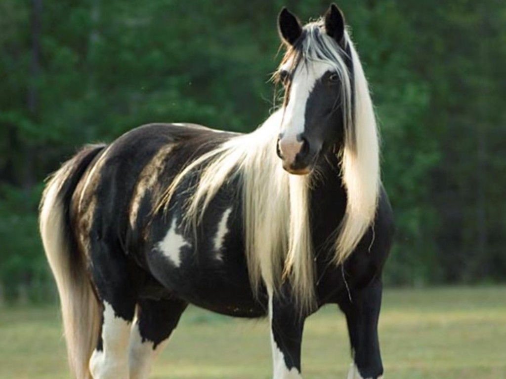 Horse white black animal photo