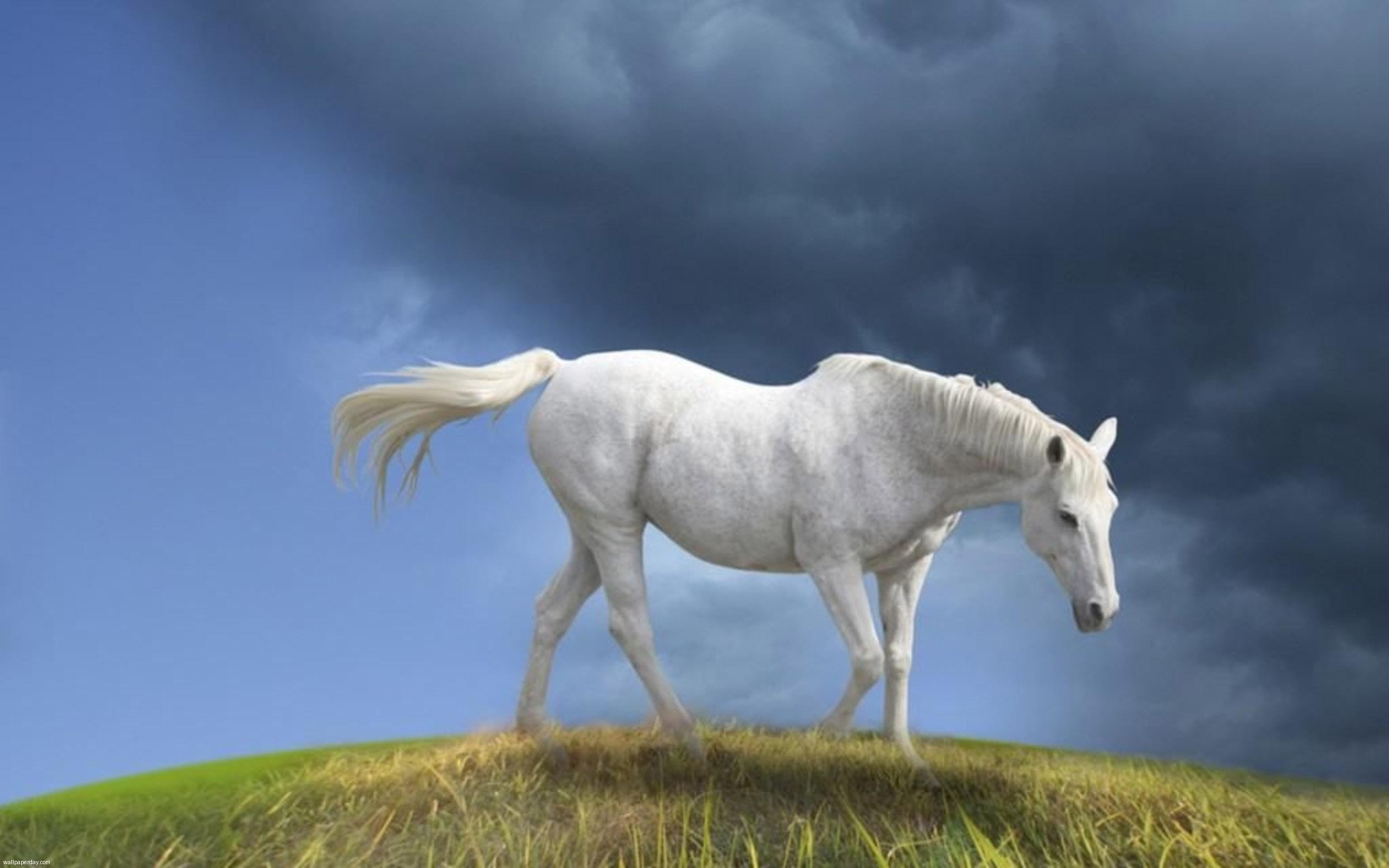 White horse animal photos