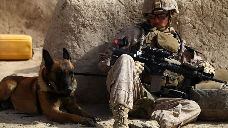 War dogs film pictures