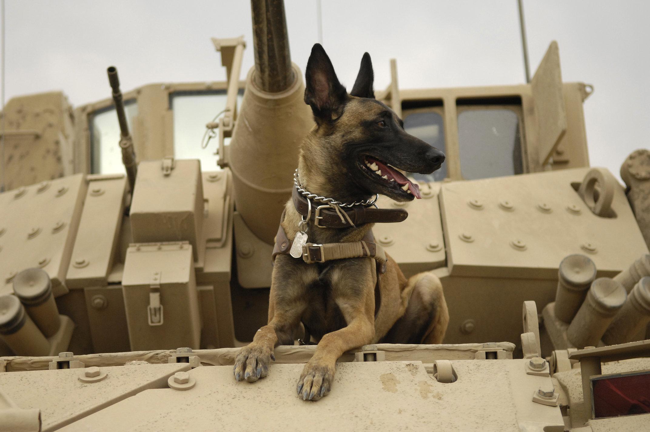 War dogs movie dog stills