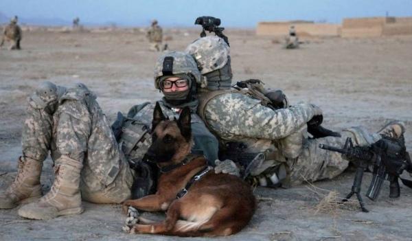 War dogs movie wallpaper