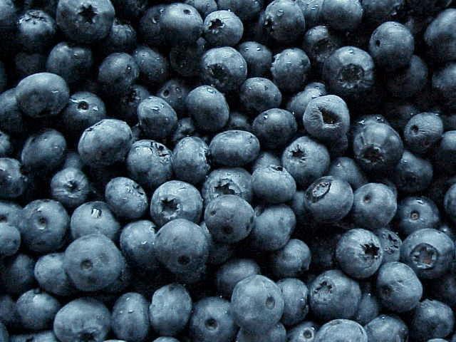 Blueberry fruit wallpaper photos