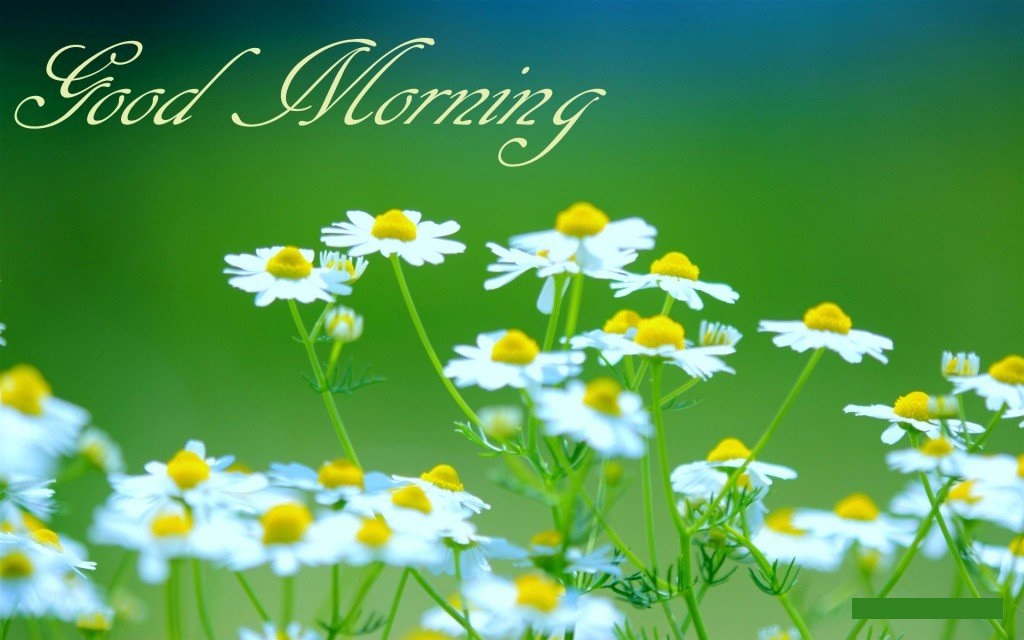 Good morning cute wallpaper