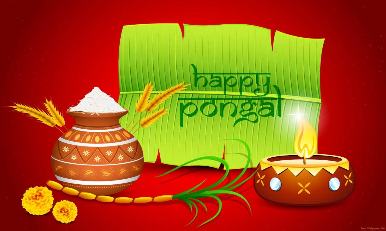 India festival thai pongal wallpapers