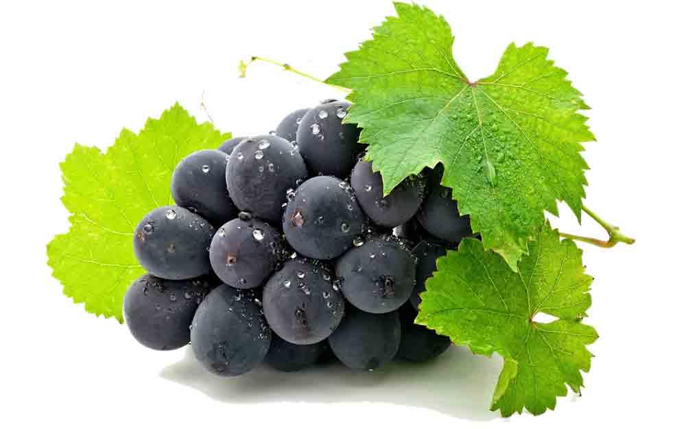 Black color grapes pictures