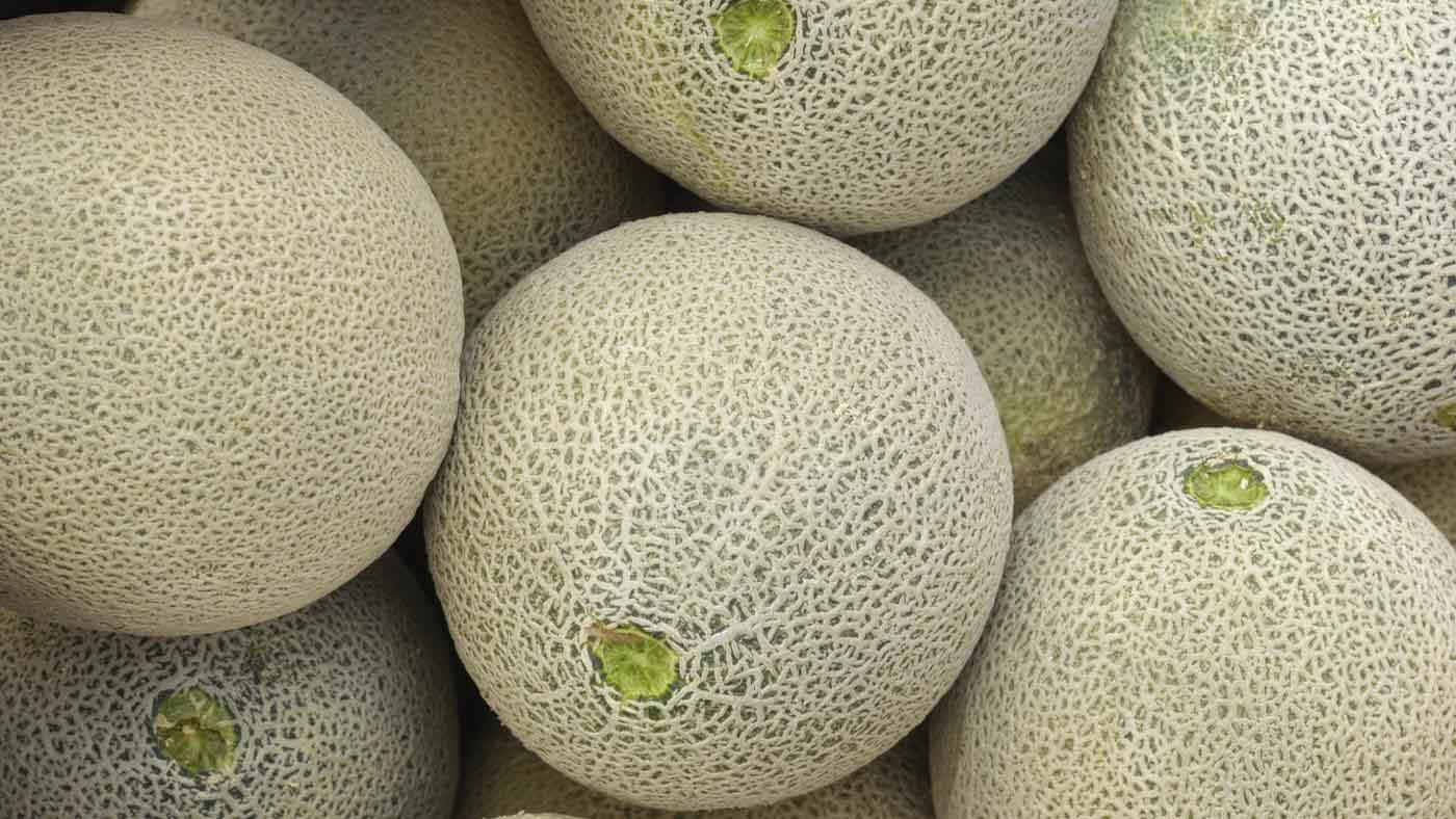 Group muskmelon fruit pics