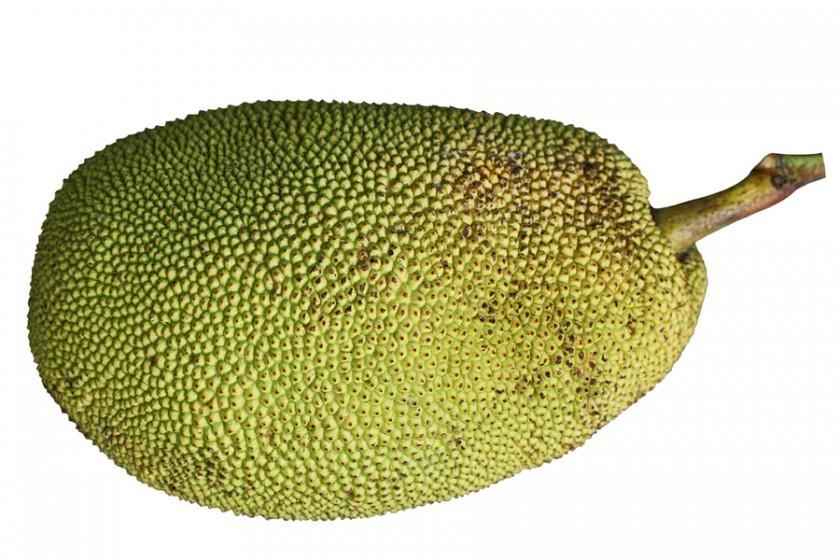 Jackfruit full fruit photos