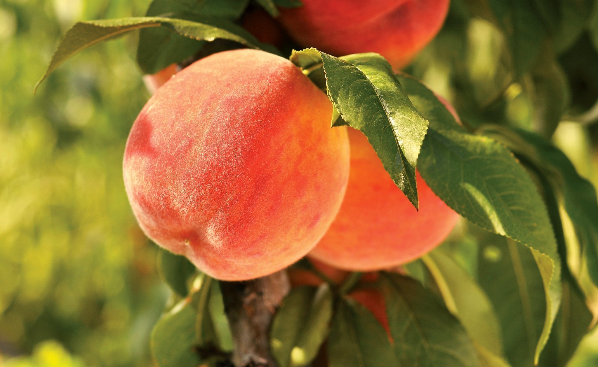 Peach fruit hd wallpapers