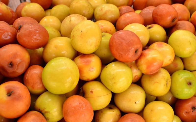 Indian jujube fruits photos