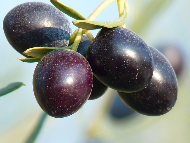 Olive fruits pictures