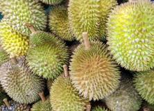 durian fruit pictures