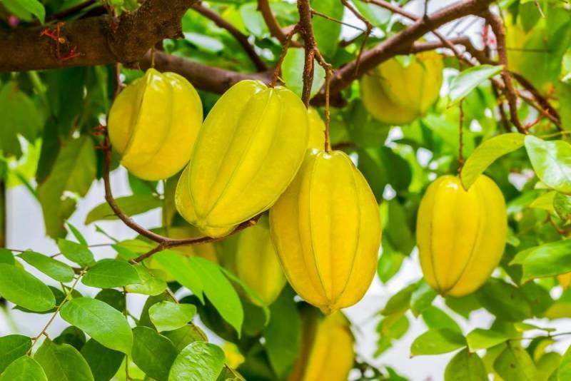 Carambola fruits wallpaper