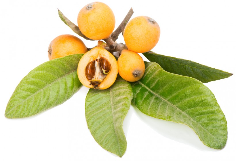 Loquat fruit wallpaper