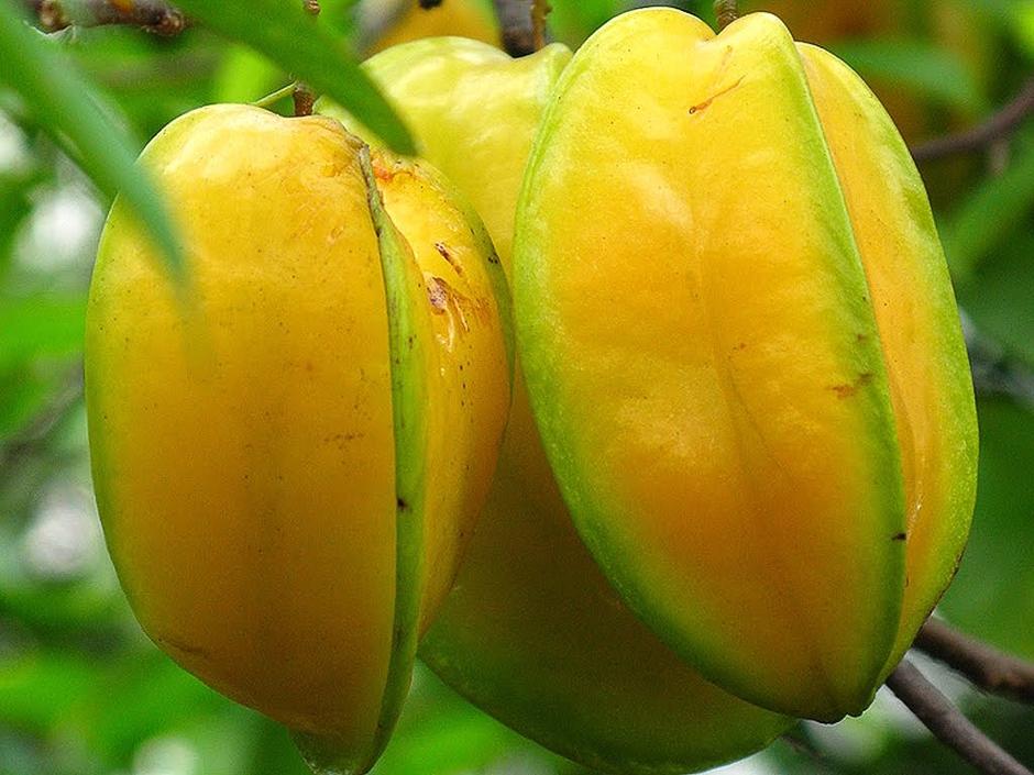 Three carambola fruit pictures