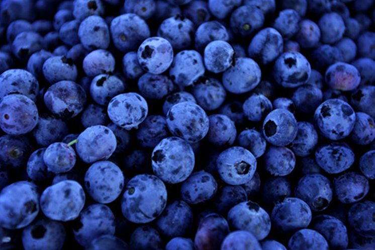Many blueberry fruit pictures