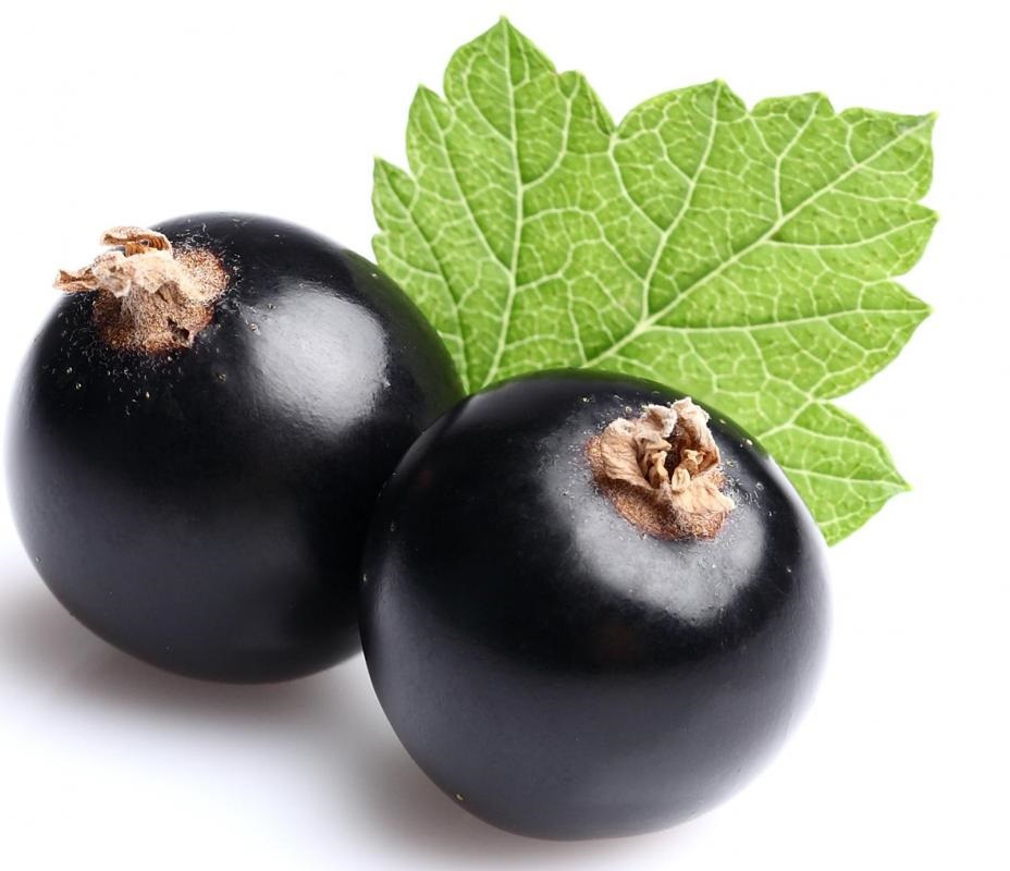 Two black currant fruit pictures